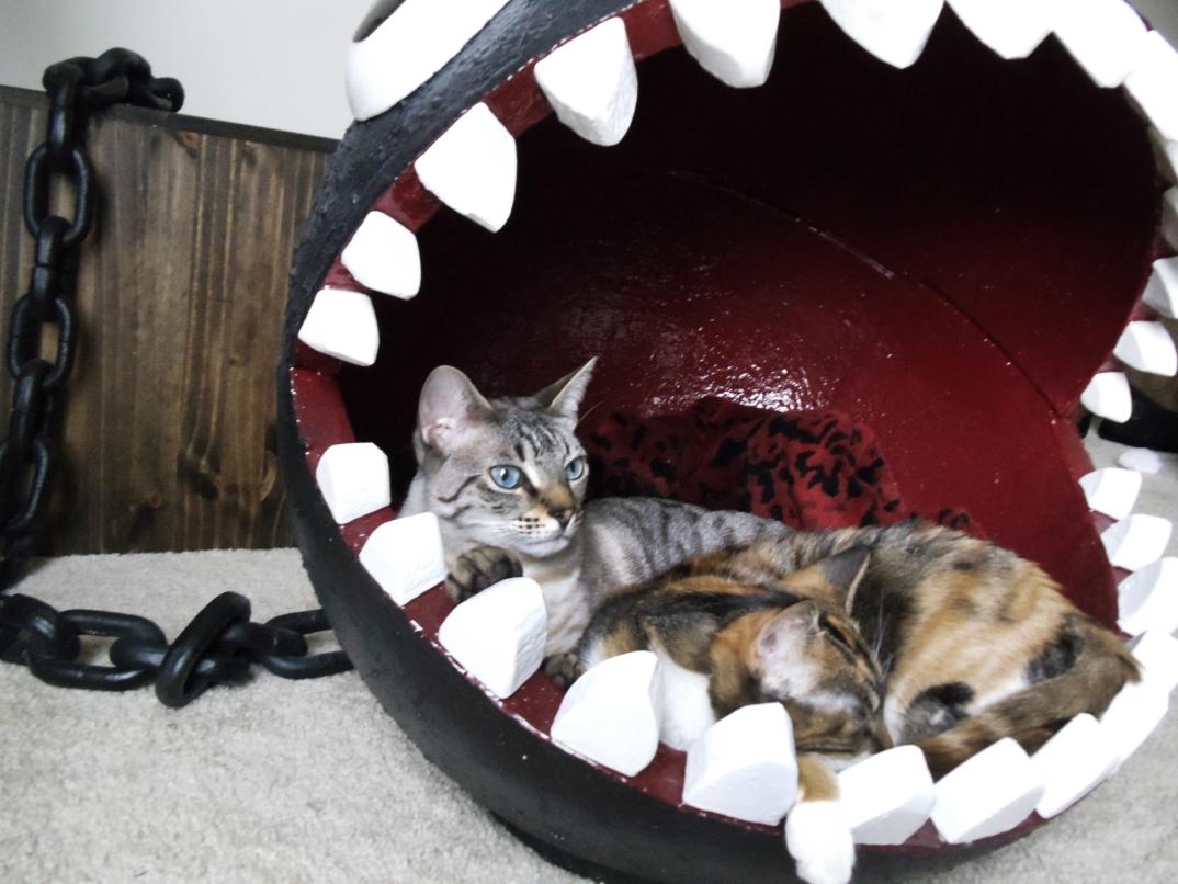 Una cuccia per gatti ispirata a categnaccio chain chomp - Cuccia per gatti ikea ...