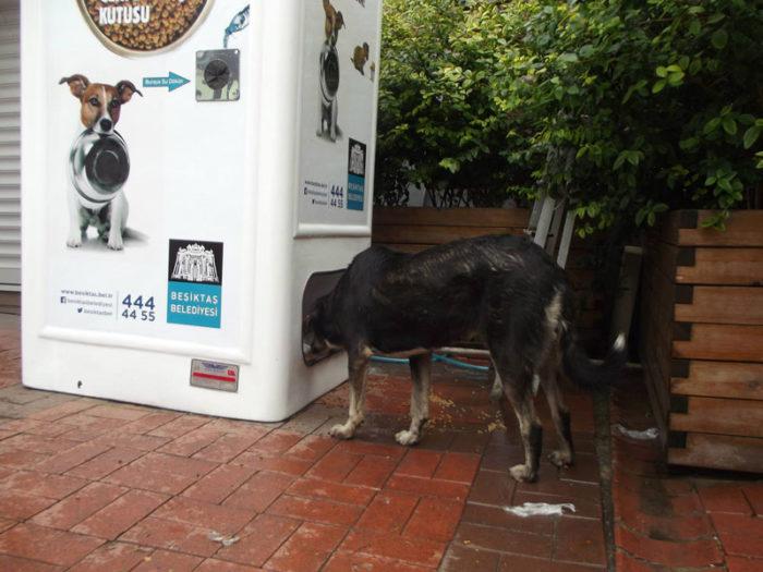 distributore-automatico-cibo-per-cani-in-cambio-di-bottiglie-istanbul-01