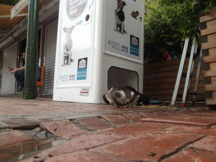 distributore-automatico-cibo-per-cani-in-cambio-di-bottiglie-istanbul-02