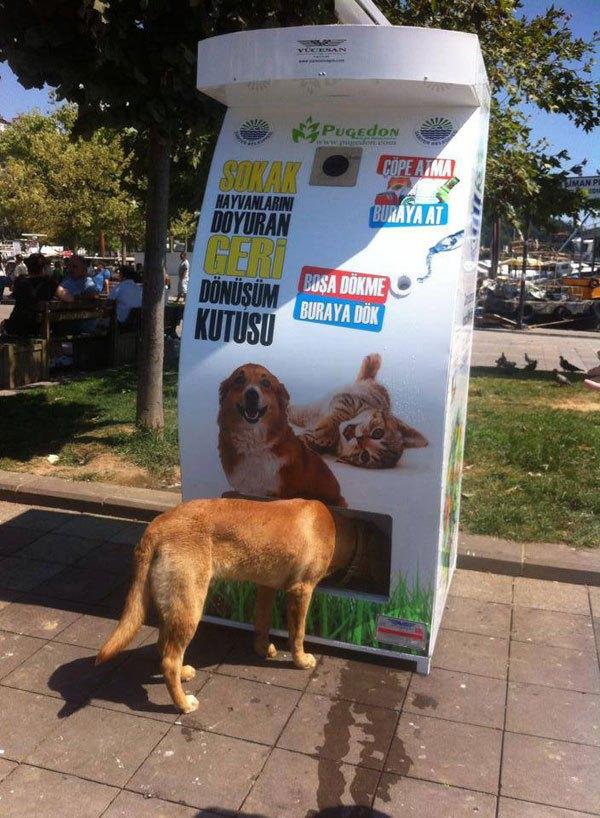 distributore-automatico-cibo-per-cani-in-cambio-di-bottiglie-istanbul-04