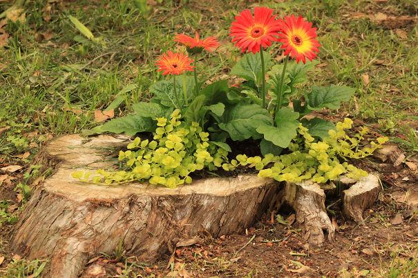 Fioriere giardino tronco albero 16 keblog for Tronco albero arredamento