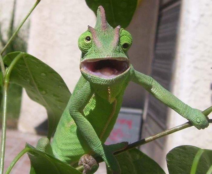 foto-di-animali-con-espressione-attonita-sorpresa-16