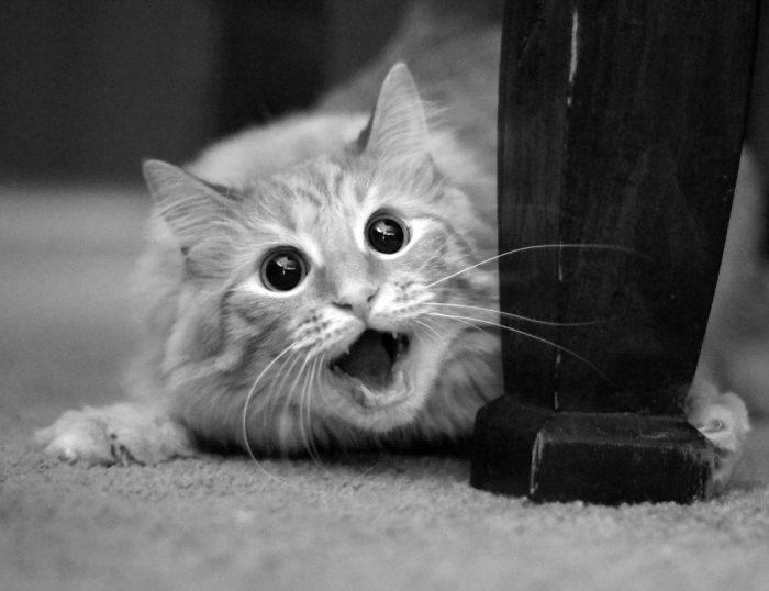 foto-di-animali-con-espressione-attonita-sorpresa-18