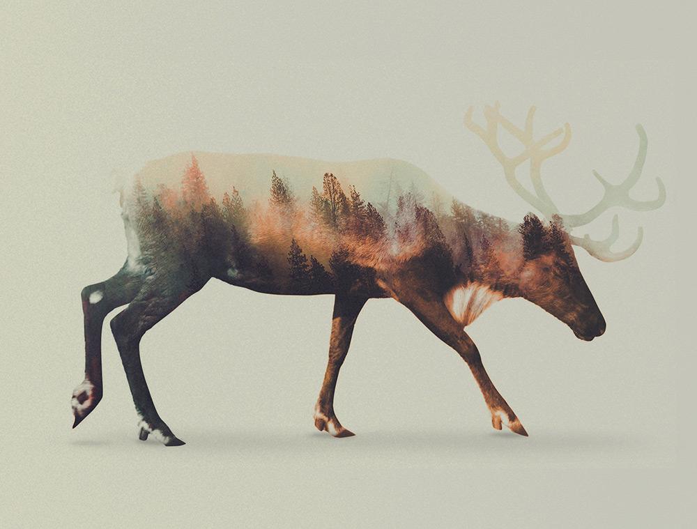 foto-doppia-esposizione-fotografia-animali-andreas-lie-05