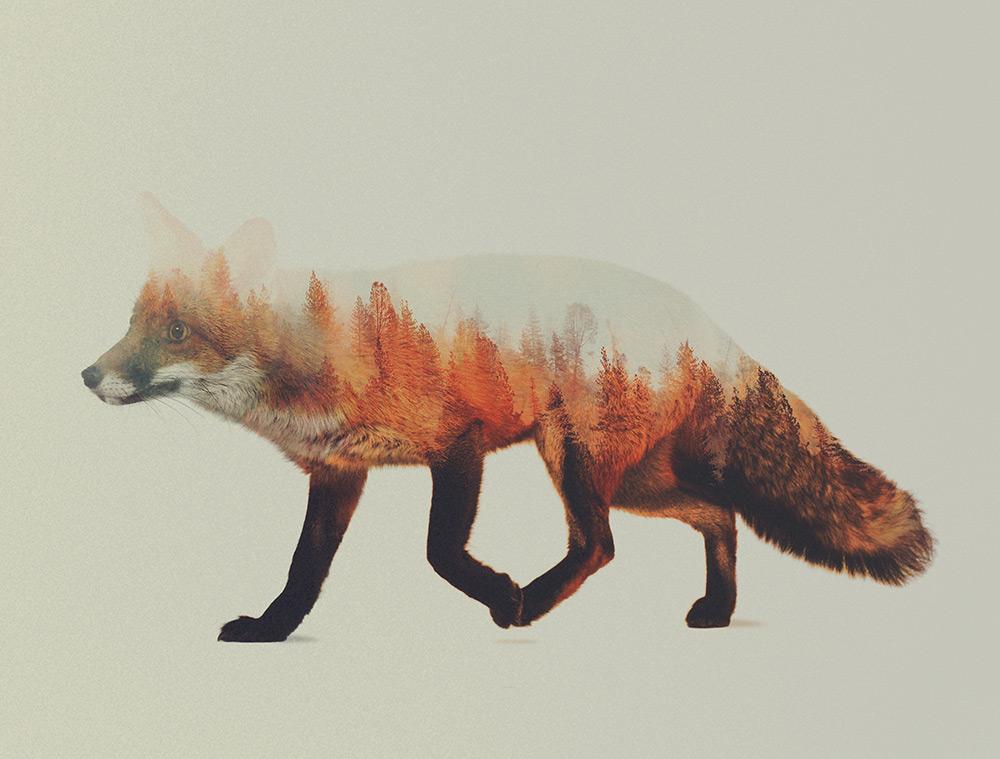 foto-doppia-esposizione-fotografia-animali-andreas-lie-08