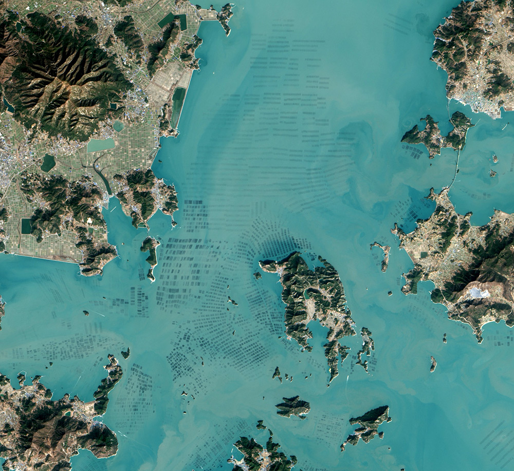 foto-satellitari-piantagioni-di-alghe-corea-del-sud-nasa-1