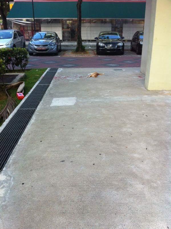 illusione-ottica-gatto-sanguinante-ferito-vernice-1