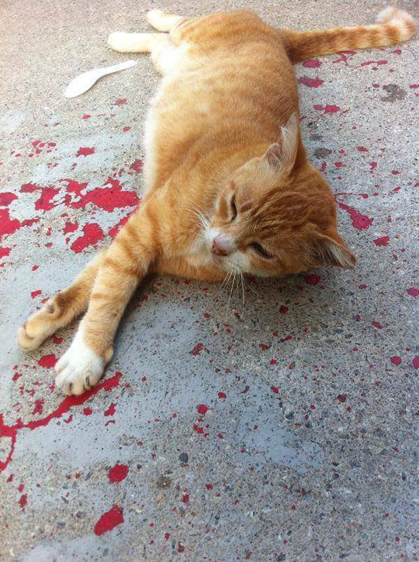 illusione-ottica-gatto-sanguinante-ferito-vernice-3