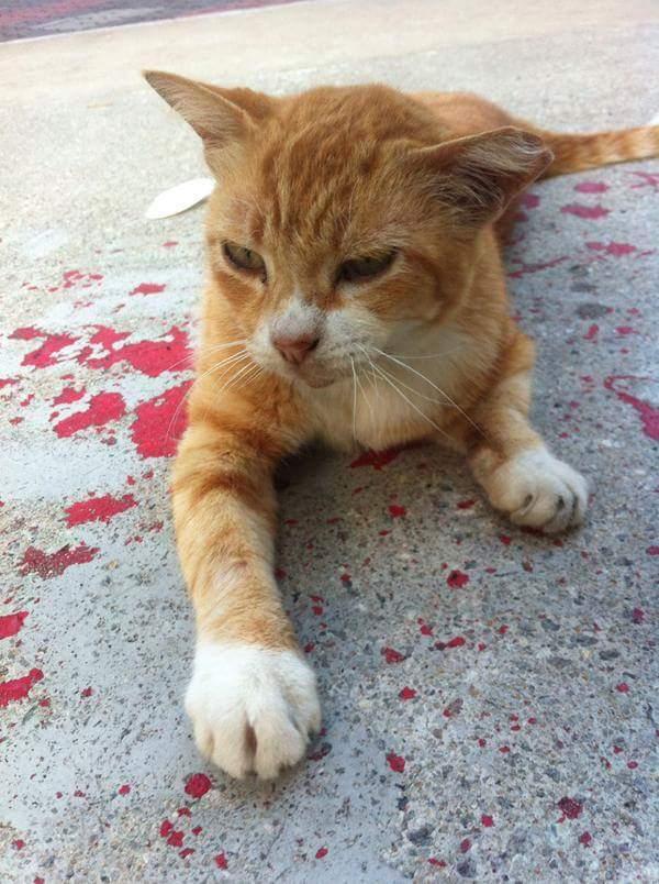 illusione-ottica-gatto-sanguinante-ferito-vernice-4