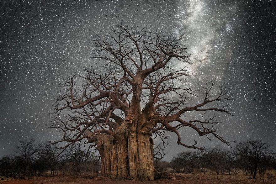 alberi-piu-antichi-mondo-notte-stelle-fotografia-beth-moon-01