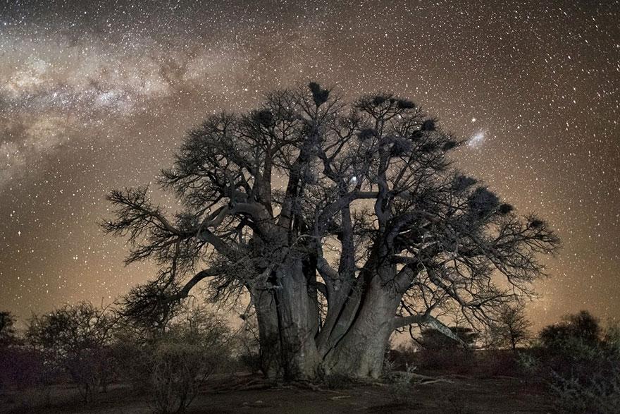 alberi-piu-antichi-mondo-notte-stelle-fotografia-beth-moon-02