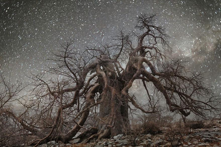 alberi-piu-antichi-mondo-notte-stelle-fotografia-beth-moon-03