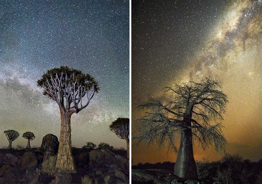 alberi-piu-antichi-mondo-notte-stelle-fotografia-beth-moon-04