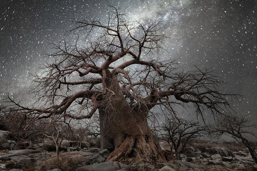 alberi-piu-antichi-mondo-notte-stelle-fotografia-beth-moon-05