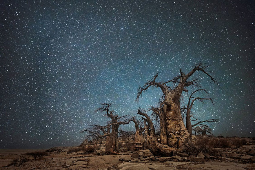 alberi-piu-antichi-mondo-notte-stelle-fotografia-beth-moon-06