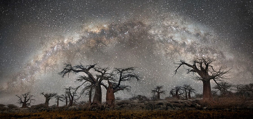 alberi-piu-antichi-mondo-notte-stelle-fotografia-beth-moon-07