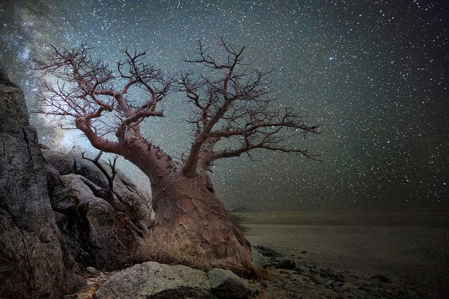 alberi-piu-antichi-mondo-notte-stelle-fotografia-beth-moon-08