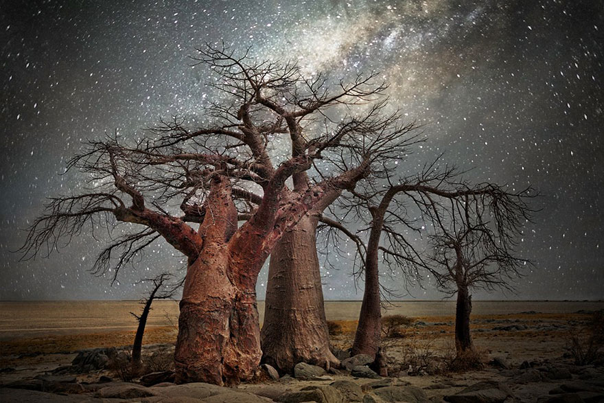 alberi-piu-antichi-mondo-notte-stelle-fotografia-beth-moon-09