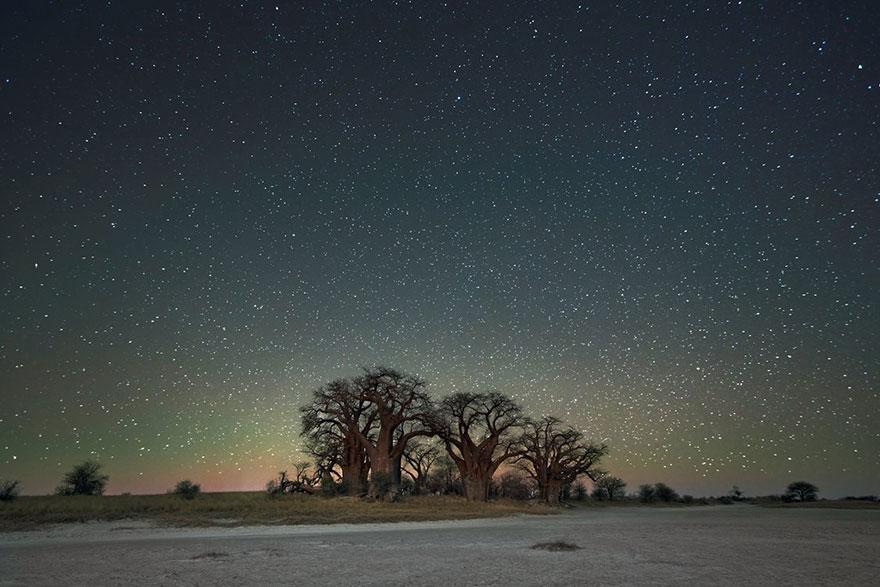 alberi-piu-antichi-mondo-notte-stelle-fotografia-beth-moon-10
