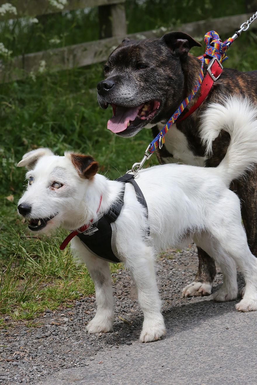 cane-aiuta-cane-cieco-cercano-casa-1