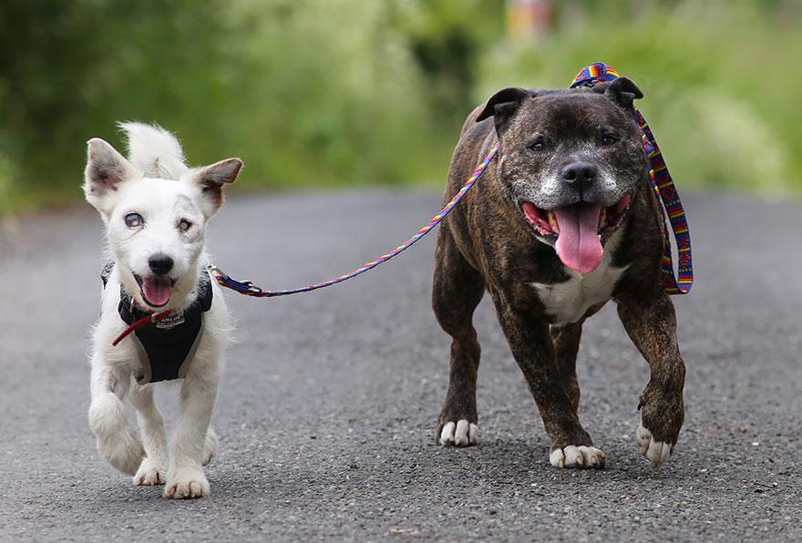cane-aiuta-cane-cieco-cercano-casa-3