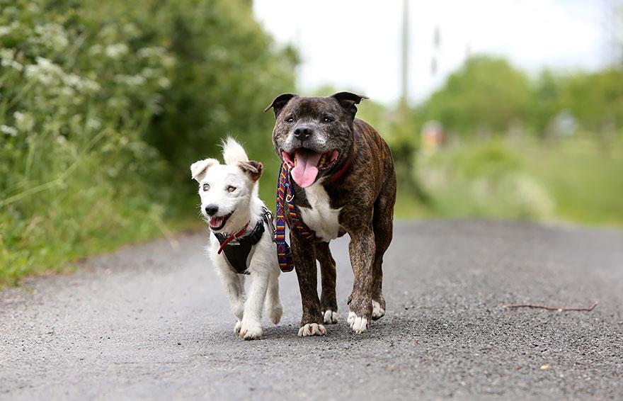 cane-aiuta-cane-cieco-cercano-casa-5