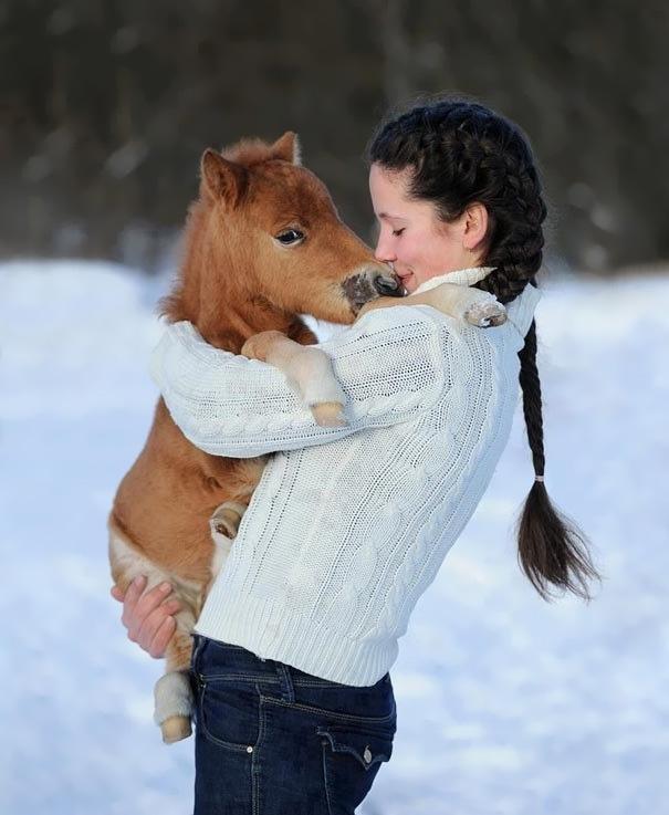 cavalli-nani-falabella-mini-pony-01