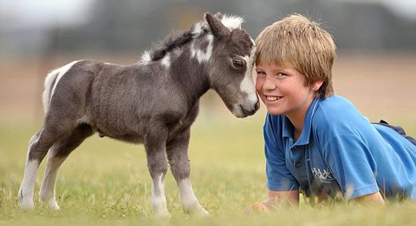 cavalli-nani-falabella-mini-pony-03