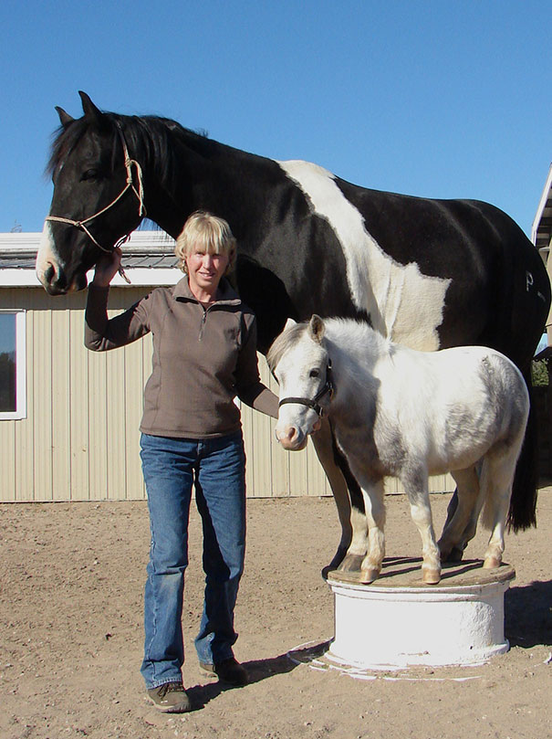 cavalli-nani-falabella-mini-pony-04