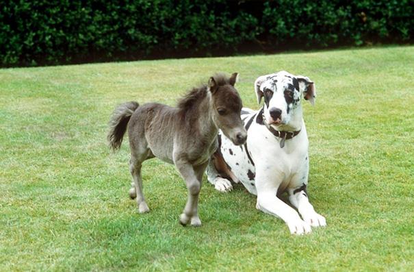 cavalli-nani-falabella-mini-pony-07