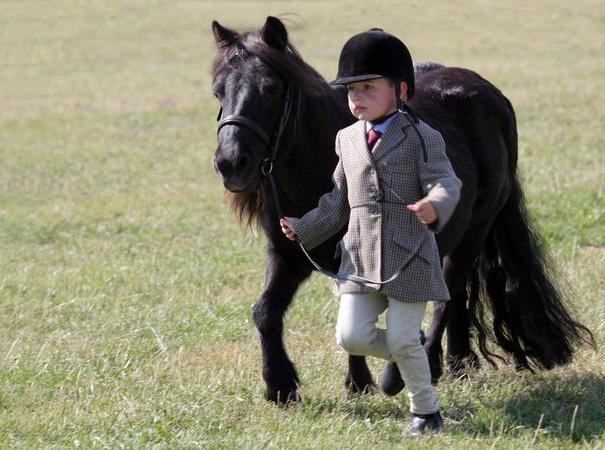cavalli-nani-falabella-mini-pony-12