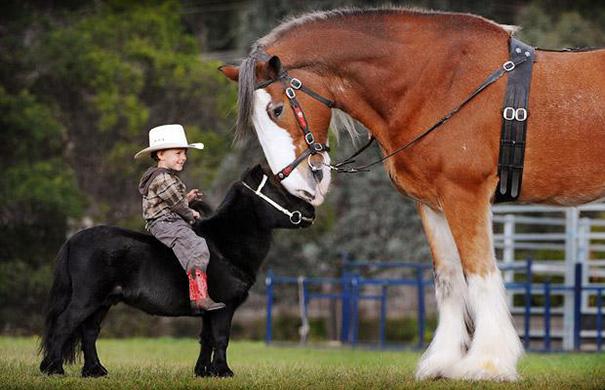 cavalli-nani-falabella-mini-pony-13