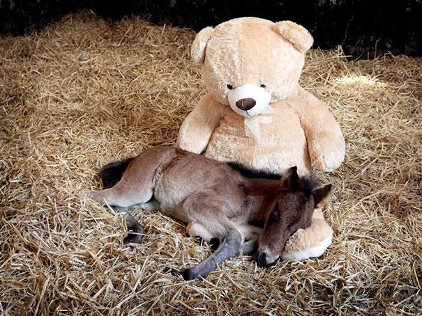 cavalli-nani-falabella-mini-pony-17