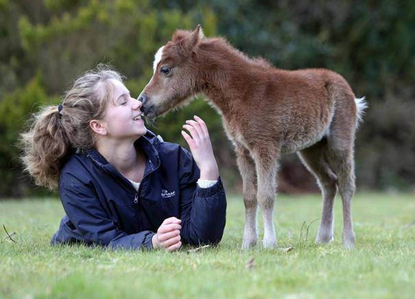 cavalli-nani-falabella-mini-pony-18