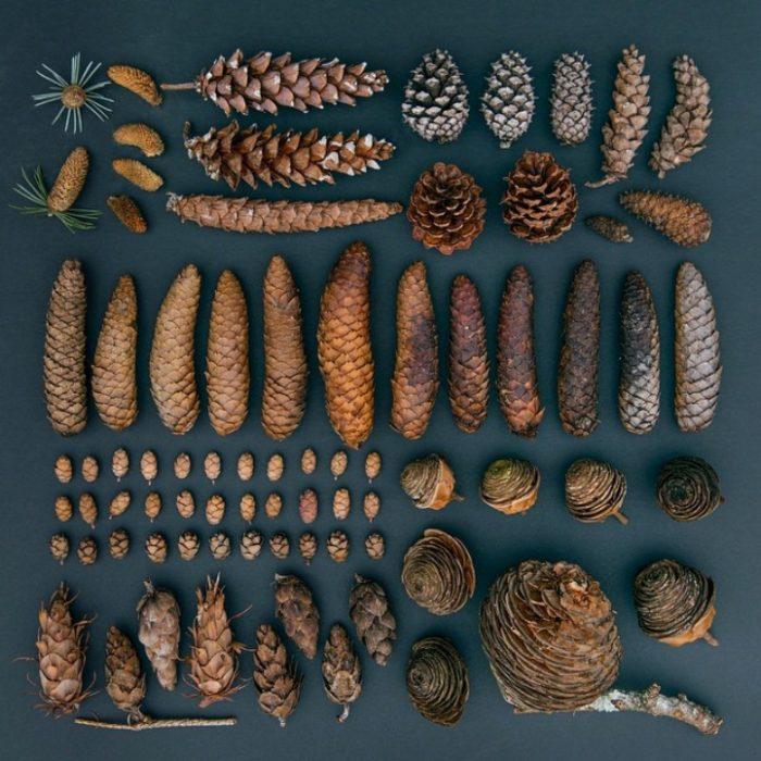 composizioni-oggetti-comuni-emily-blincoe-02