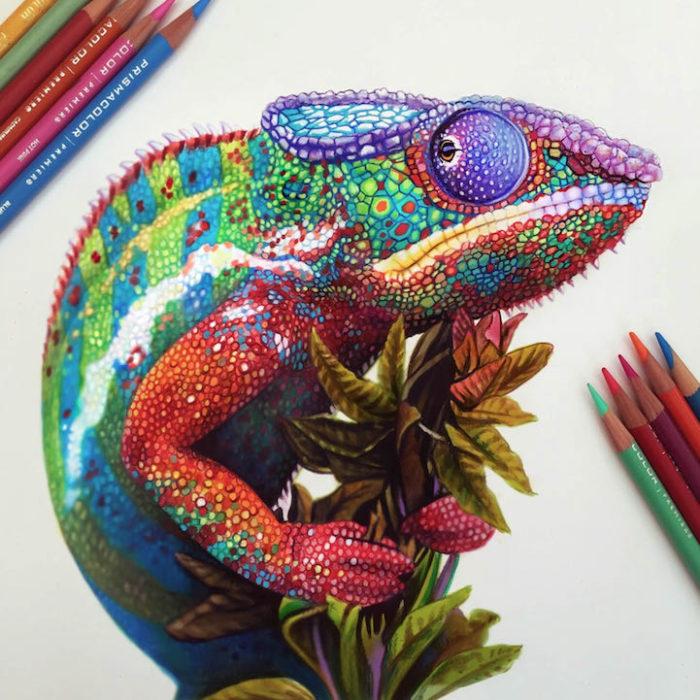 disegni-illustrazioni-colori-a-matita-vivaci-morgan-davidson-5