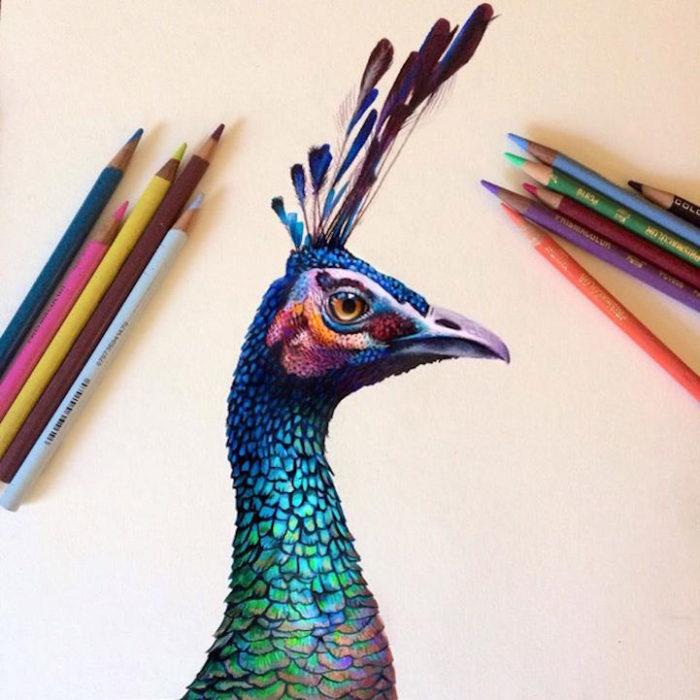 disegni-illustrazioni-colori-a-matita-vivaci-morgan-davidson-6