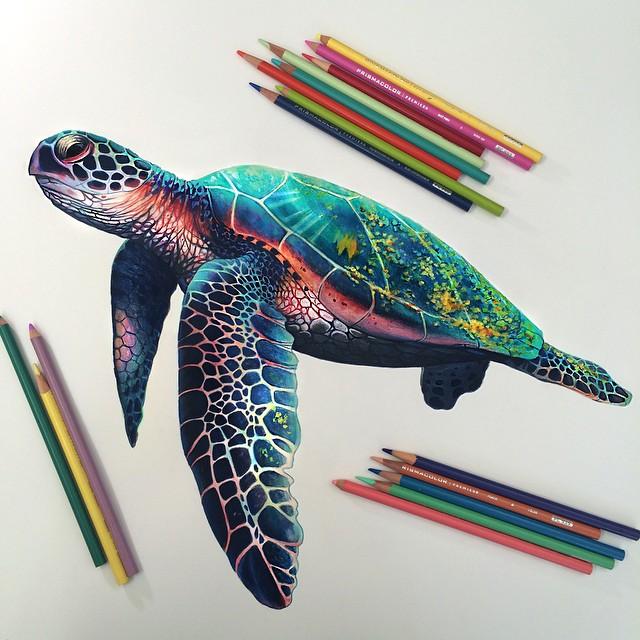 disegni-illustrazioni-colori-a-matita-vivaci-morgan-davidson-7