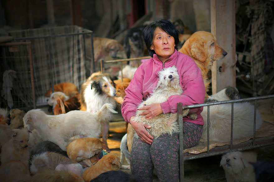 donna-salva-cani-macellati-dogs-eating-festival-cina-01