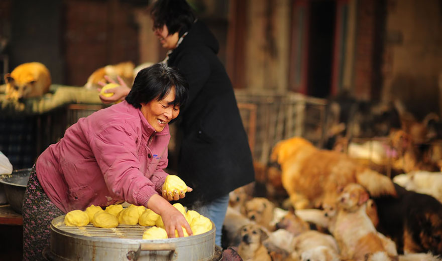 donna-salva-cani-macellati-dogs-eating-festival-cina-02