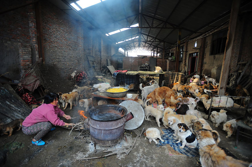donna-salva-cani-macellati-dogs-eating-festival-cina-03