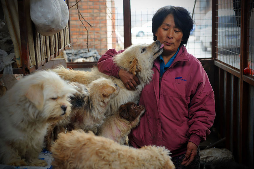 donna-salva-cani-macellati-dogs-eating-festival-cina-04