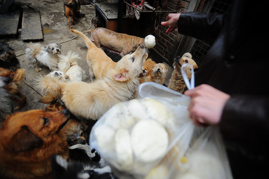 donna-salva-cani-macellati-dogs-eating-festival-cina-06