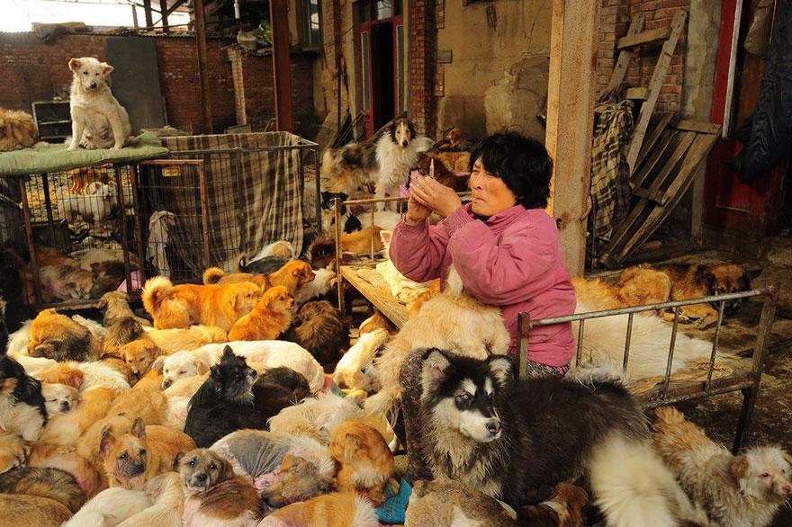 donna-salva-cani-macellati-dogs-eating-festival-cina-12