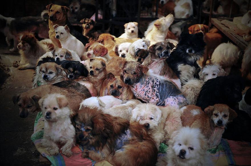 donna-salva-cani-macellati-dogs-eating-festival-cina-19