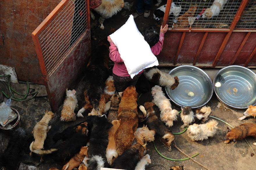 donna-salva-cani-macellati-dogs-eating-festival-cina-21
