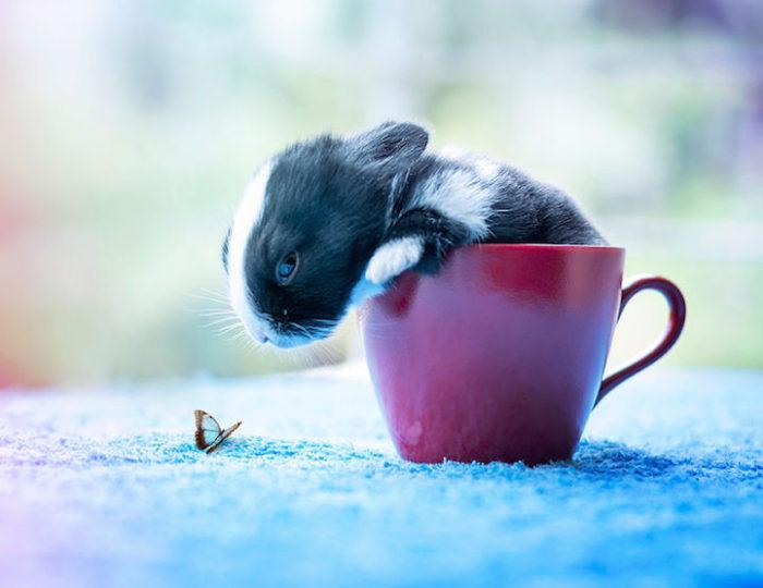 foto-coniglietti-cuccioli-ashraful-arefin-01