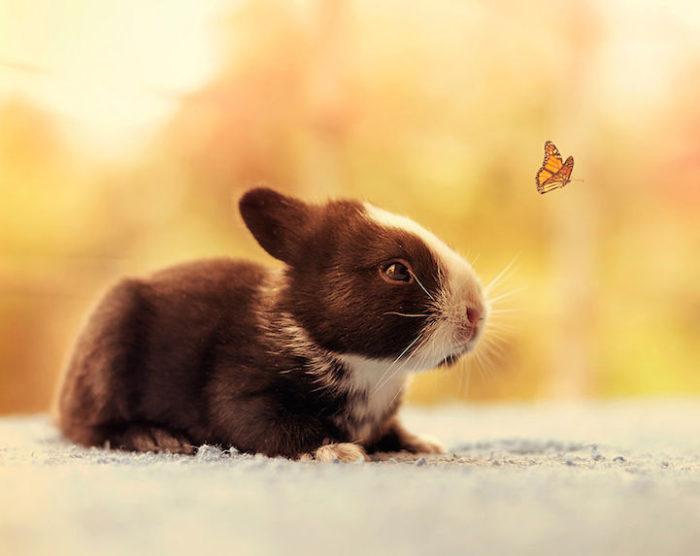foto-coniglietti-cuccioli-ashraful-arefin-02