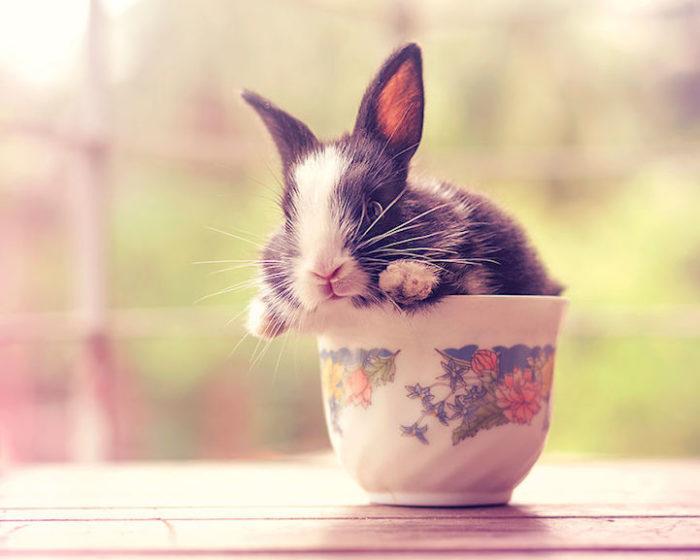 foto-coniglietti-cuccioli-ashraful-arefin-03