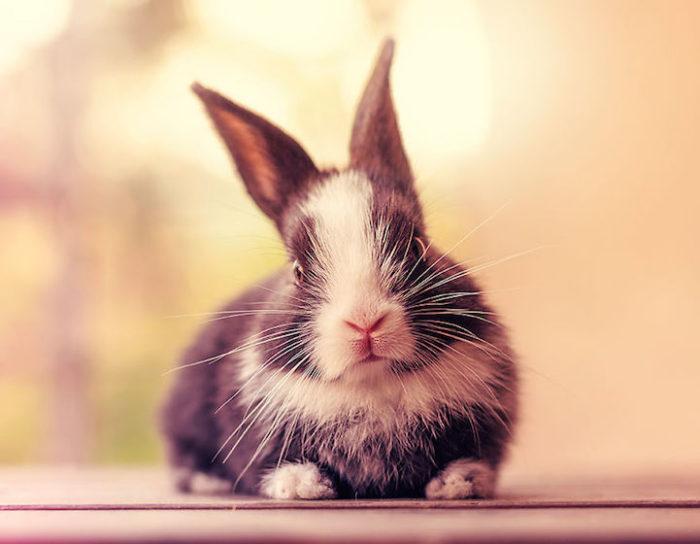 foto-coniglietti-cuccioli-ashraful-arefin-04